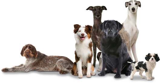 Leader of the Pack – Dog Training School – Sit Happens